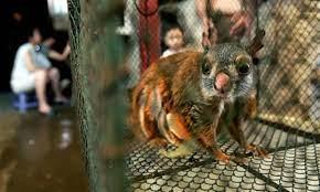 Buôn lậu động vật hoang dã tại Việt Nam vẫn diễn ra rất sôi động