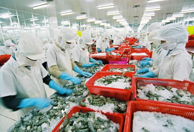 Quy chế xử phạt khắt khe, doanh nghiệp chế biến thủy sản rơi vào thế bí